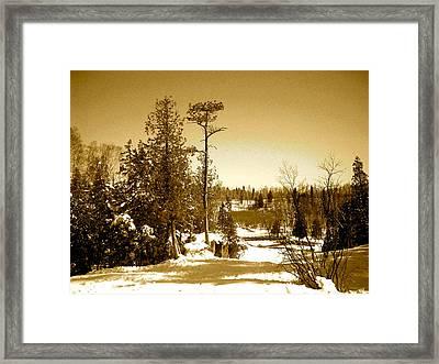 Goosberry Tree Framed Print by Eric Larson