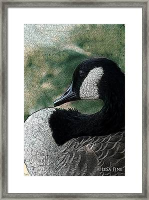 Framed Print featuring the photograph Goose Art Pap Daddy Goose II by Lesa Fine