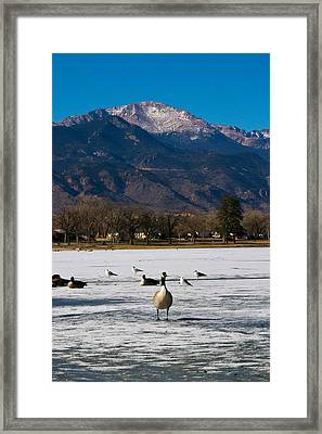 Goose At The Peak Framed Print by Matt Radcliffe