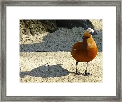 Goose Framed Print by Eva Csilla Horvath