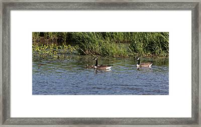 Framed Print featuring the photograph Goose Family In The Water by Leif Sohlman