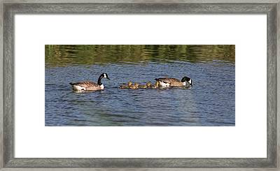 Framed Print featuring the photograph Goose Family by Leif Sohlman