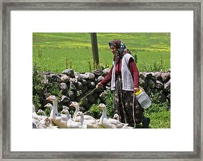 Goose Farming Framed Print by Bob Gibbons