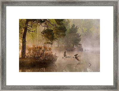 Goose Fight Framed Print