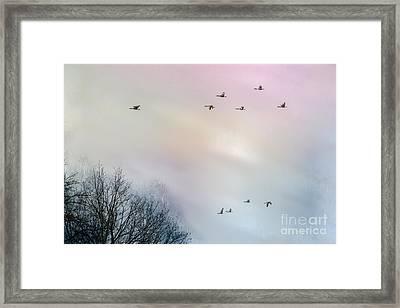 Goose Flight Framed Print by Hannes Cmarits