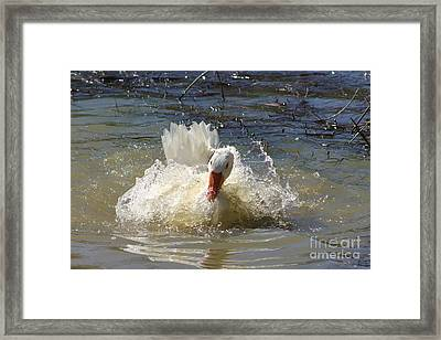 Goose Framed Print by Giovanni Chianese