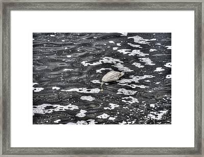 Goose Hunting Framed Print