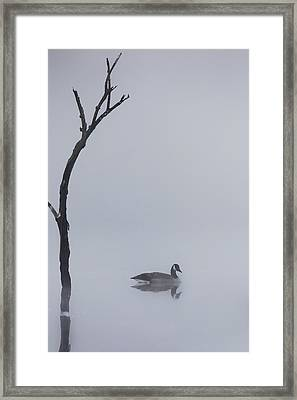 Goose Of The Fog Framed Print