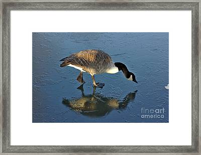Goose On Ice Framed Print