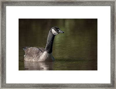 Goose On Pond Framed Print by Len Romanick