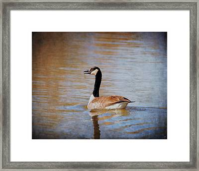 Goose On The Water Framed Print by Jai Johnson