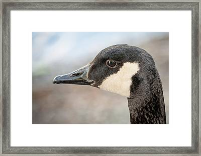 Goose Profile Framed Print by Len Romanick