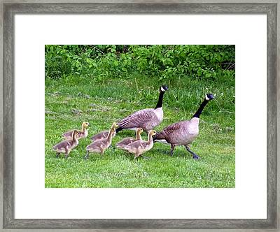 Goose Step Framed Print by Will Borden
