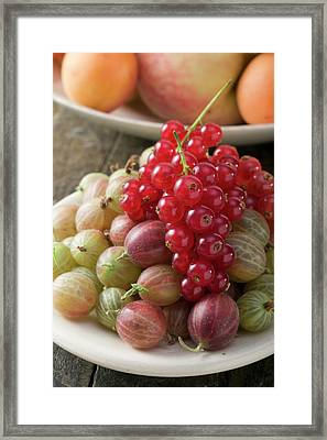 Gooseberries And Redcurrants Framed Print