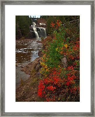 Gooseberry Foilage Framed Print