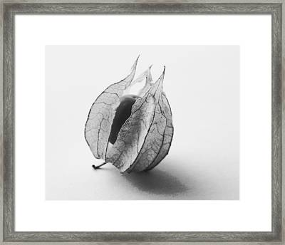 Framed Print featuring the photograph Gooseberry In Black And White by Jocelyn Friis