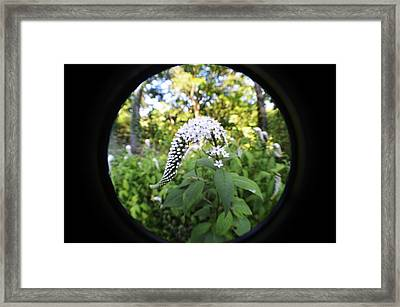 Gooseneck With A Fisheye Framed Print