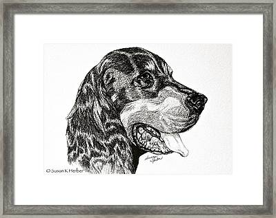 Gordon Setter Framed Print by Susan Herber