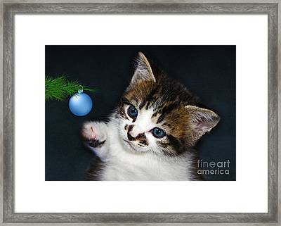 Gorgeous Christmas Kitten Framed Print by Terri Waters