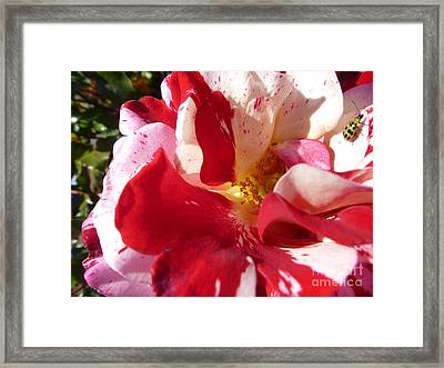 Gorgeous Home Framed Print by Anat Gerards