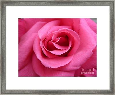 Framed Print featuring the photograph Gorgeous Pink Rose by Vicki Spindler