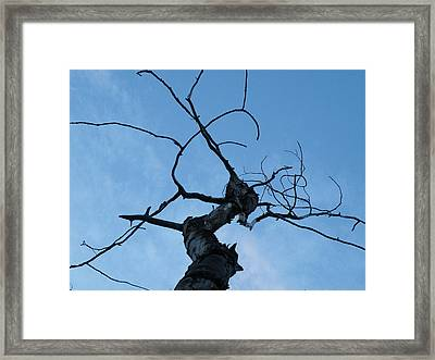 Framed Print featuring the photograph Gorgon by Brian Boyle