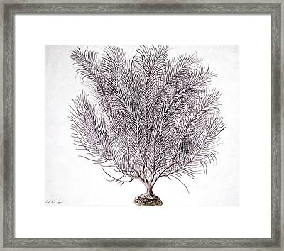 Gorgonian Coral, Artwork Framed Print by Science Photo Library