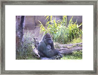 Gorilla Framed Print by Barbara Snyder