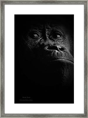 Gorilla Framed Print by Christine Sponchia
