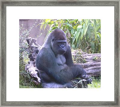 Gorilla Close Up Framed Print by Barbara Snyder