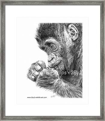 Gorilla Infant Framed Print by Karen E Phillips