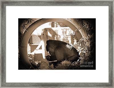 Gorilla  Framed Print by Karen Adams