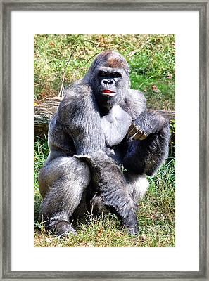 Gorilla Framed Print by Kathleen K Parker