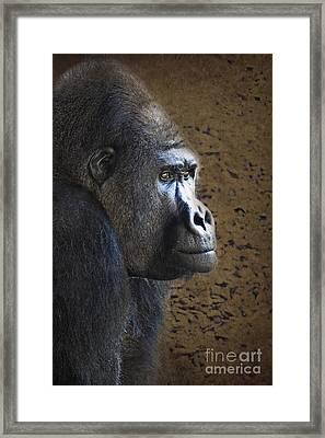 Gorilla Portrait Framed Print by Heiko Koehrer-Wagner