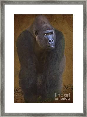 Gorilla The Muscleman Framed Print by Heiko Koehrer-Wagner