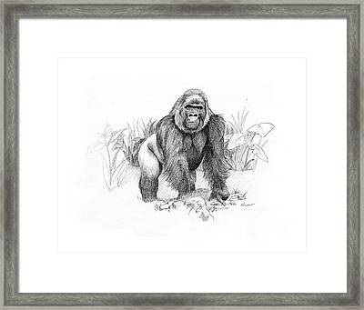 Gorilla Framed Print by Timothy Ramos