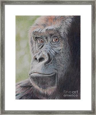 Gorilla's Gaze Framed Print by Tamara Oppel