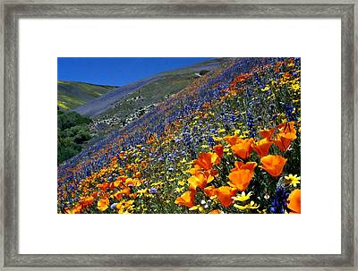 Gorman Flower Field In Full Bloom Framed Print