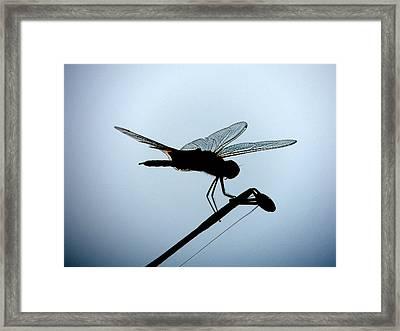 Gossamer Wings Framed Print by Marilyn Holkham