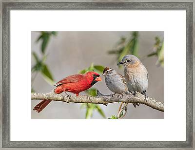 Gossip Session Framed Print by Bonnie Barry