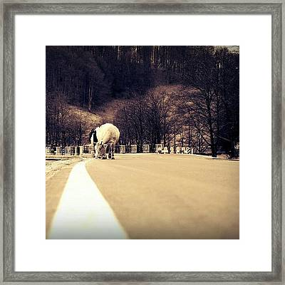 Got A #stroke? #cow #road #forest Framed Print