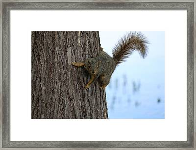 Lookin' For Nuts Framed Print