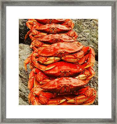 Got Crab? Framed Print by Karen Horn