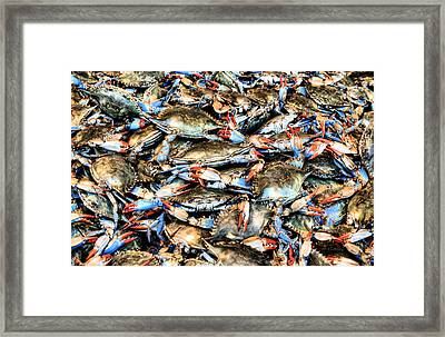Got Crabs Framed Print