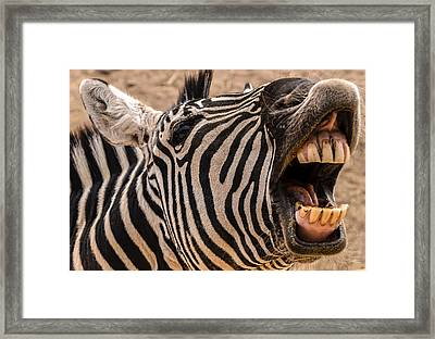 Got Dental? Framed Print by Mark Myhaver