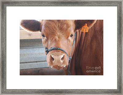 Got Milk Framed Print by Jamie Riley