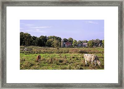 Got Milk Framed Print by John Crothers