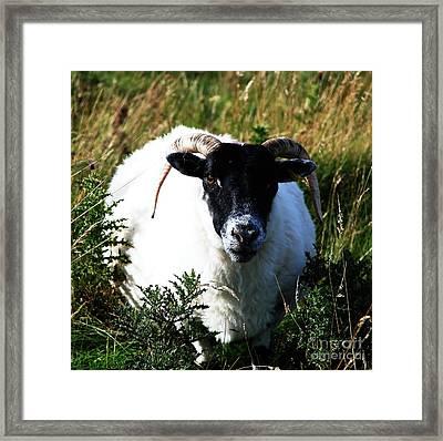 Got My Eye On Ewe Framed Print by Michelle Bailey