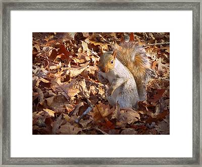 Got Nuts Framed Print