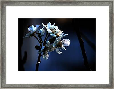 Got The Blues Framed Print by Silke Brubaker